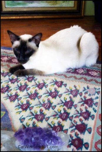 crystal-amethyst-healing-siamese-cat