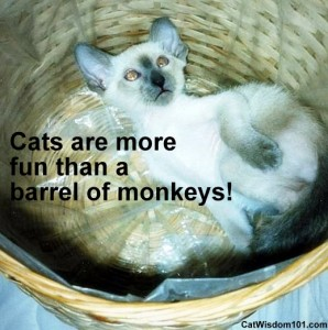 cute-kitten-barrel-monkeys-fun-merlin