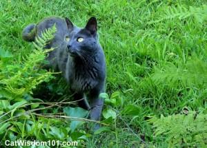 gray-cat-garden-wisdom 101-gris gris