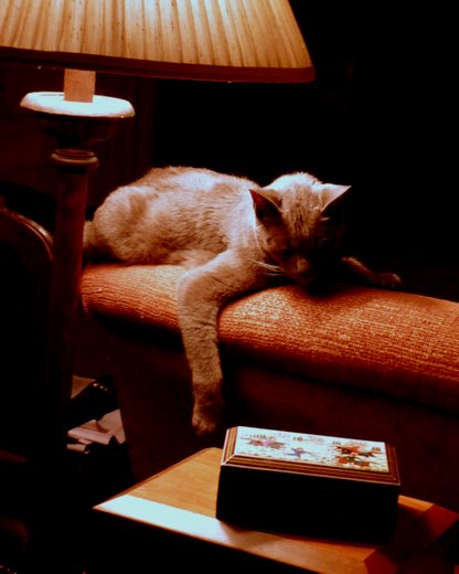 gris gris-lounging-cat-sofa