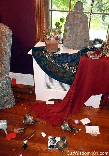 killing-the-buddha-cat-mischief