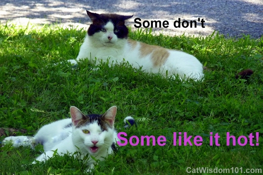 quote-some-like-it-hot-cats-domino-odin