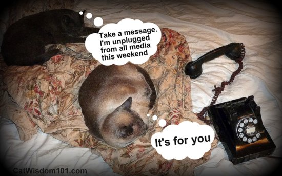 unplugged-social-media-cats-funny-vintage-phone