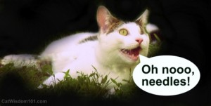 vaccination-cat-humor-needles-300x151 vaccination-cat-humor-needles-odin