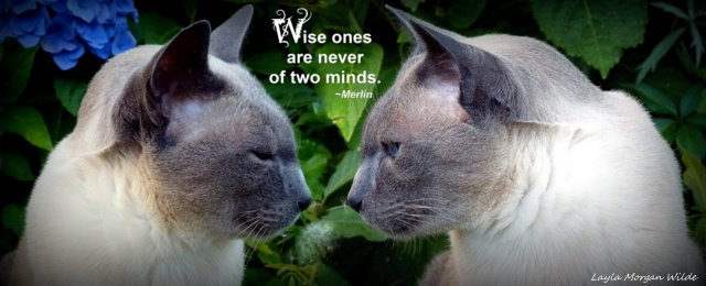 wise-cat-quote-wisdom 101-merlin