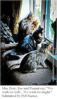 cat-wisdom 101-zee-zoey--blogpaws-caption-contest-winner