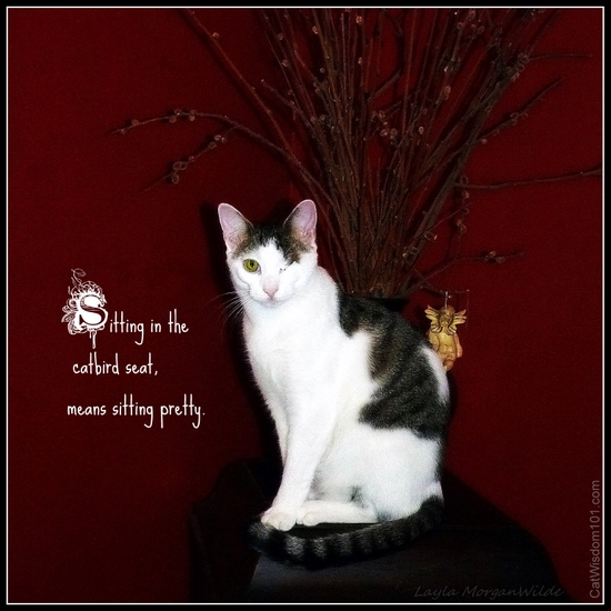 Cat-sitting-pretty-quote-catbird-wisdom-odin