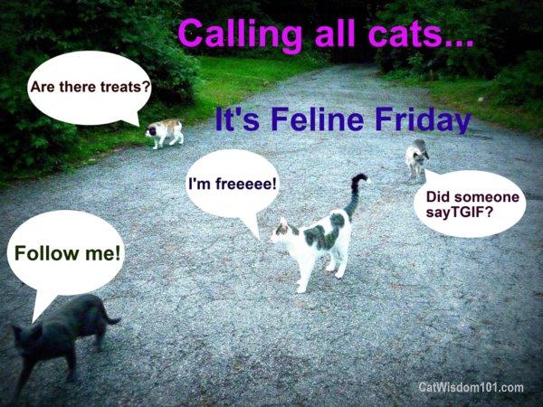 Feline-friday-follow-cats-TGIF