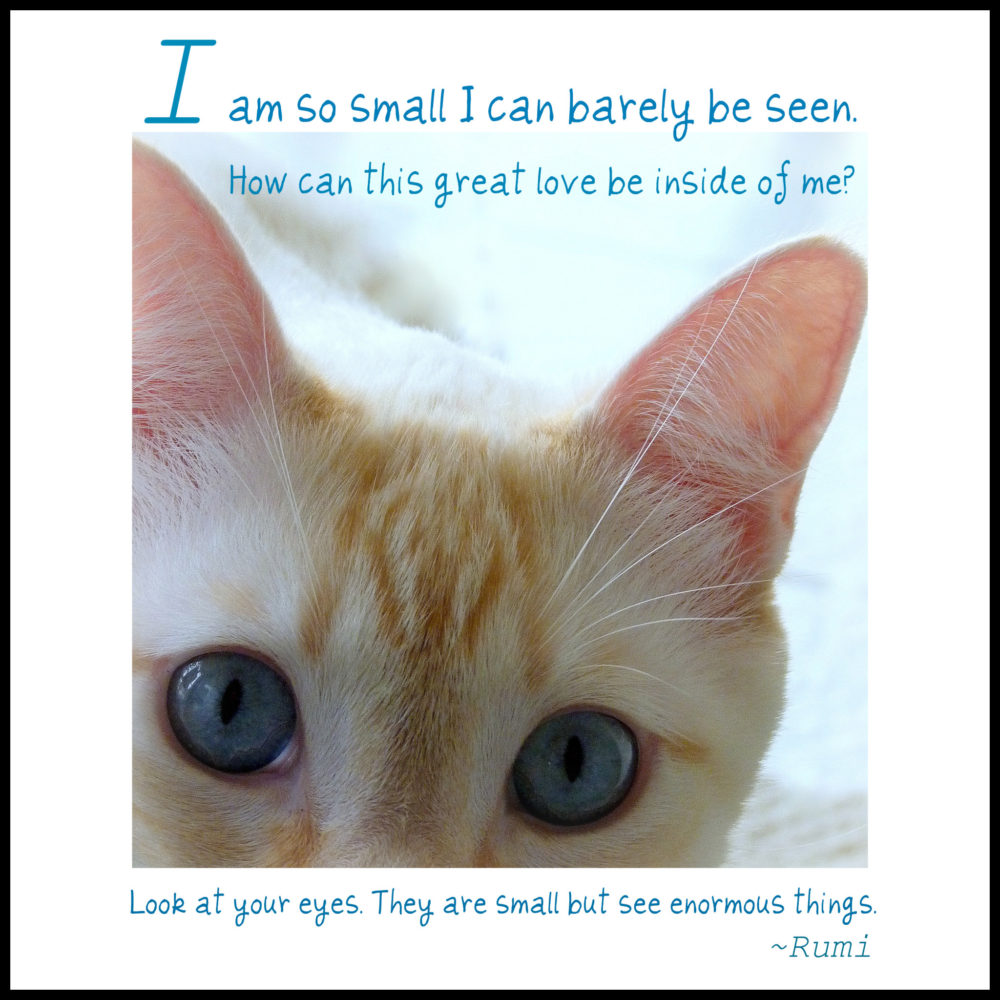 feline photo quote de jour