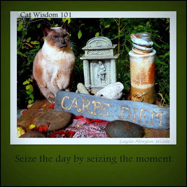 SEIZE-THE-DAY-QUOTE-CAT-HUMOR-wisdom