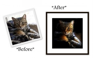 before and after-cat-phoot-editing-contest