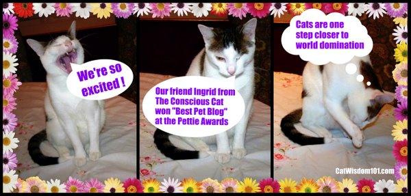 blogpaws-pettie-winner-conscious-cat-best-pet-blog