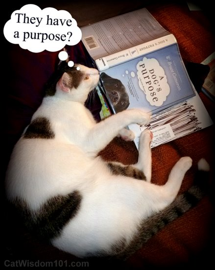 book-dogs-purpose-cameron-cat-cute-caption