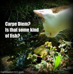 carpe diem-funny-cat-quote