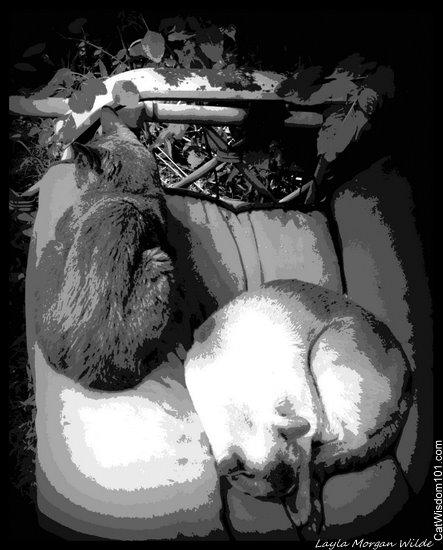 cat-art-study-in-gray