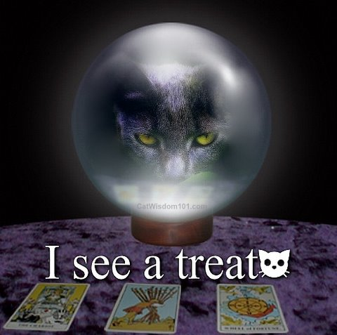 crystal ball cat nomz time