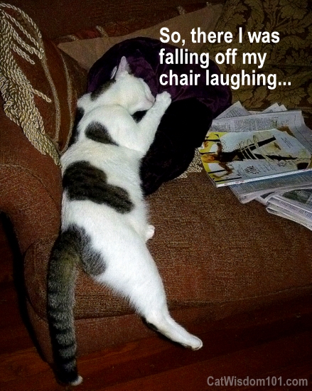 cat-falling-off-chair-laughing-cute Cat Saturday Garden Party