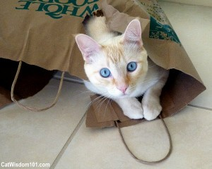 cat-in-bag-whole-foods-funny