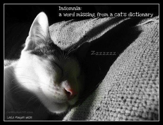 Funny Insomnia Quotes. QuotesGram