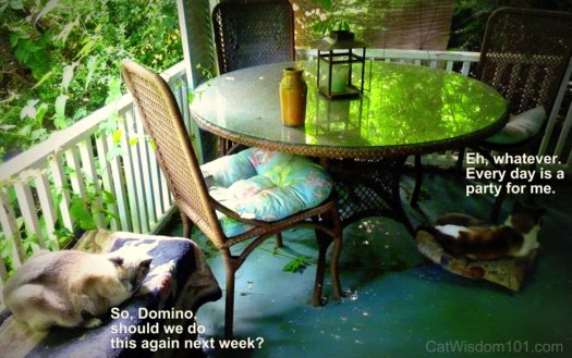 cat-napping-porch-summer-fun Cat Saturday Garden Party