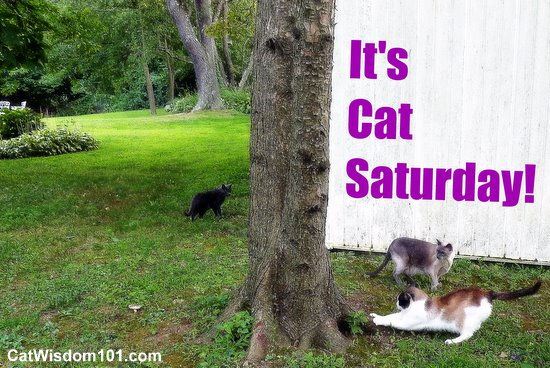 cat-saturday-caturday-outdoors