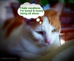 cat-sitting-funny-vacation-bored-300x247 Cat Saturday Garden Party