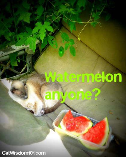 cat-watermelon-swing-party Cat Saturday Garden Party