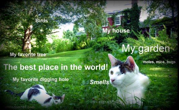 cat-world