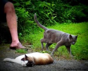 cats-catman-catmen-