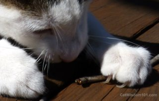 cats claws