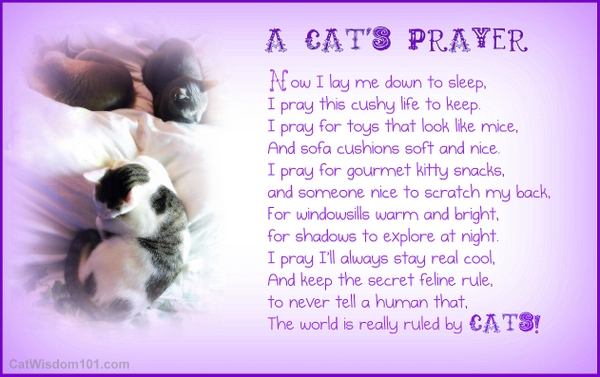 cat's prayer-humor