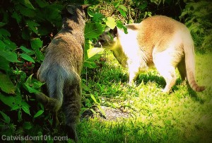 cats-sniffing-bushes-blackberry