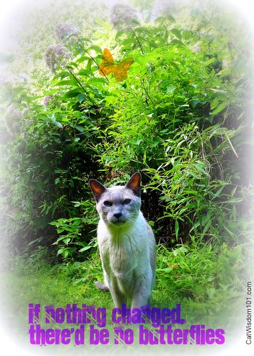changes-quote-butterflies-cat-merlin