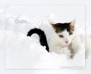 chilling-quote-cute-cat-snow