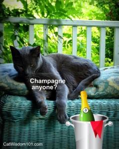debonair-cat-champagne-cute-poster-gris gris