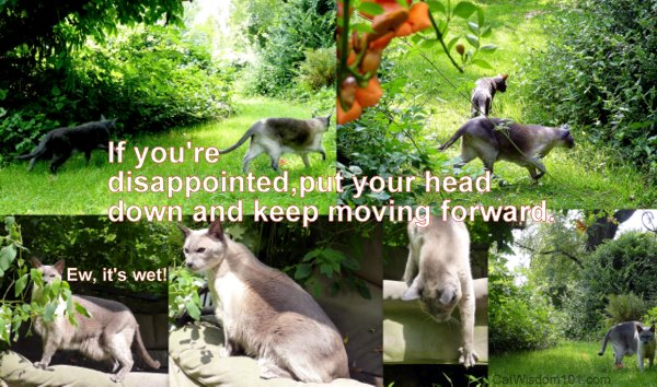 disappointment-quote-move-forward-cats
