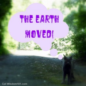 earth-moved-earthquake-cat-humor
