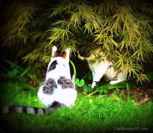 fine-art-pet-photography-cats