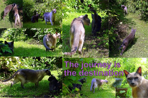 journey is destination-quote-cats