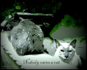 nobody-owns-a-cat-quote-art