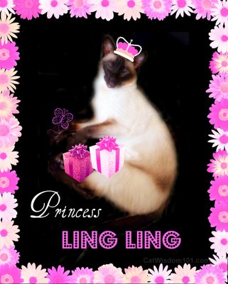 princess-ling ling-siamese-cat