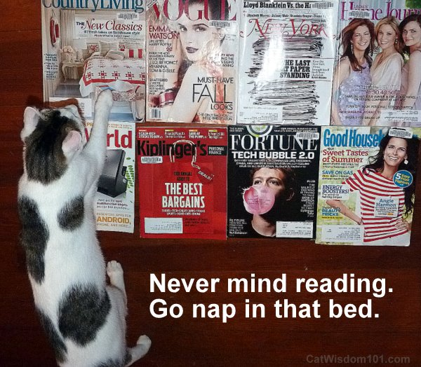 reading-cat-magazines-cute-nap-odin