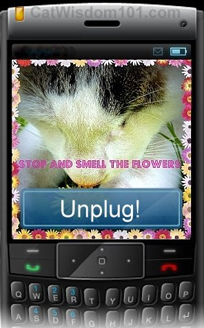 stop-smell-flowers-unplug-cat-cute-cell phone-quote