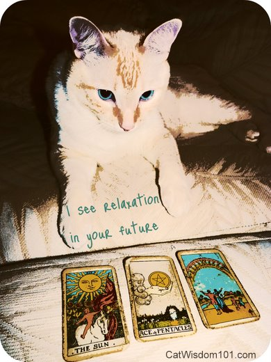 [Obrazek: tarot-kitty-future-cute-funny-cat.jpg]