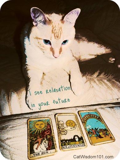 tarot-kitty-future-cute-funny-cat