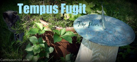 tempus-fugit-time-flies-quote-cat-garden