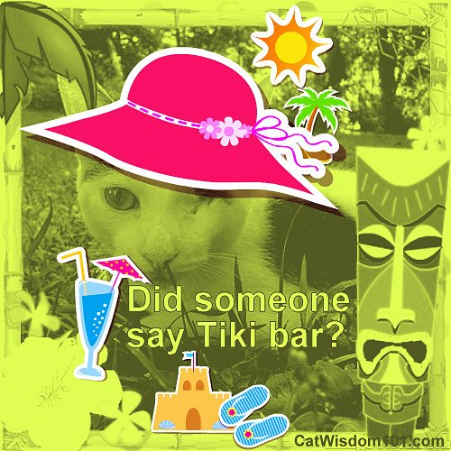 tiki-bar-cute-cat-tropical-odin