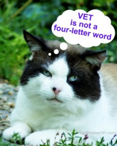 vet-is-not-a four-letter-word
