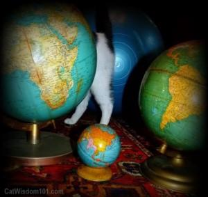 vintage-globes-cat-funny-odin