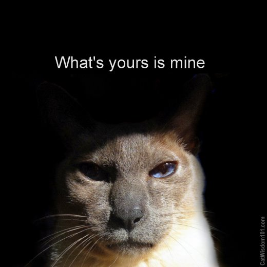 what's -yours-is mine-cat-quote-cute-siamese